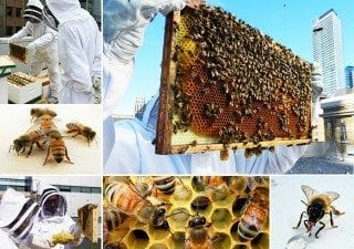 Bee Project - MaRS installs hives on rooftop