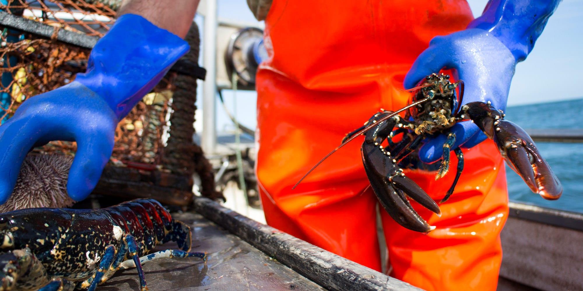 Precious cargo: How IoT sensors and AI could help keep perishable goods safe